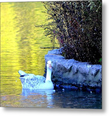 Metal Print featuring the photograph Lucy by Deena Stoddard