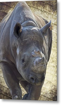 Lurching Rhino Metal Print by Bill Tiepelman