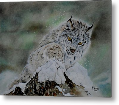 Lynx Playing With Snow Metal Print by Hendrik Hermans