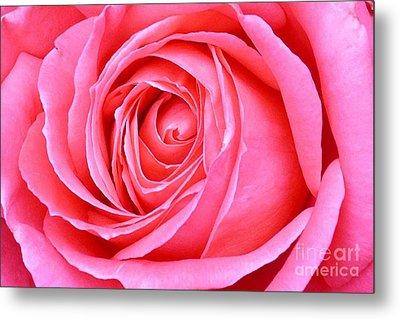 Magenta Rose Metal Print by Paul Clinkunbroomer