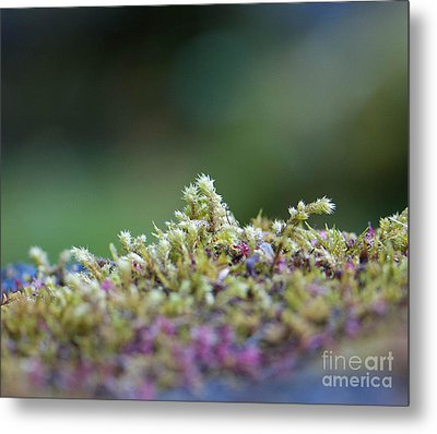 Magical Moss Metal Print by Sarah Crites