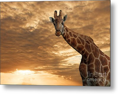 Magical Savanna Metal Print by Pete Reynolds