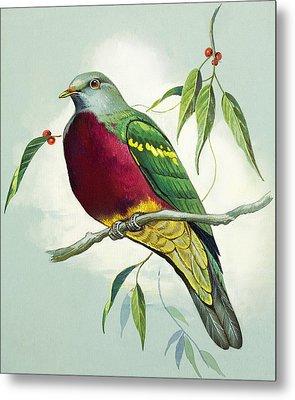 Magnificent Fruit Pigeon Metal Print by Bert Illoss