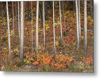 Majestic Autumn In The Grand Tetons Metal Print by Sandra Bronstein