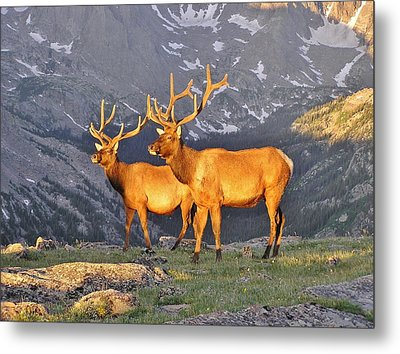 Metal Print featuring the photograph Majestic Elk by Diane Alexander