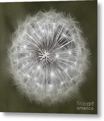 Make A Wish Metal Print by Peggy Hughes