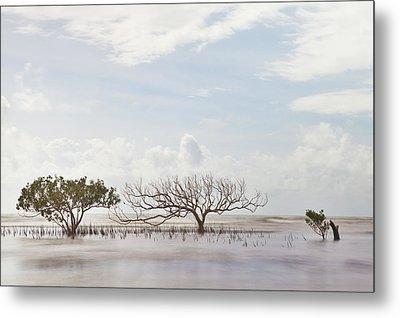 Mangrove Tree In Blurred Sea Metal Print by Dirk Ercken