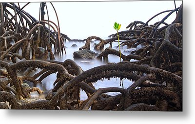 Mangrove Tree Roots Detail Metal Print by Dirk Ercken