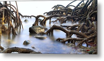 Mangrove Tree Roots Metal Print by Dirk Ercken