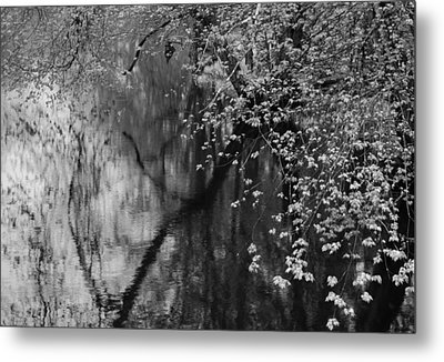Metal Print featuring the photograph Maples Over Collins Creek by Jim Vance