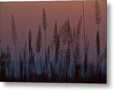 Marsh Grasses In Kaziranga National Metal Print by Steve Winter