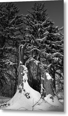 Metal Print featuring the photograph Midwest Sequoia by Ed Cilley