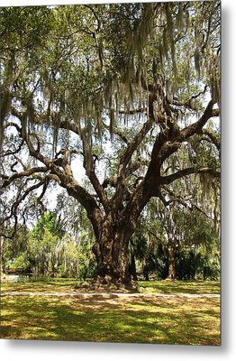 Metal Print featuring the photograph Mighty Oak by Beth Vincent