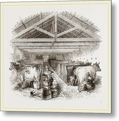 Milking-shed Metal Print by Litz Collection