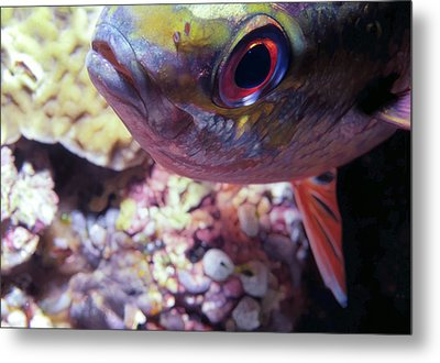 Miscellaneous Fish 5 Metal Print by Dawn Eshelman