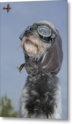 Mixed Breed Dog Dressed In Leather Cap Metal Print