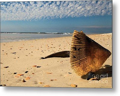 Monster Clam Metal Print by Adam Jewell