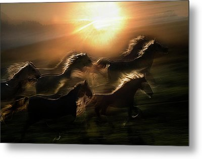Morning  Gallop Metal Print
