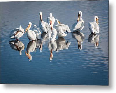 Metal Print featuring the photograph Morning Groom by Jan Davies