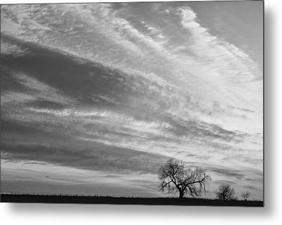 Morning Has Broken Three Trees Bw Metal Print by James BO  Insogna