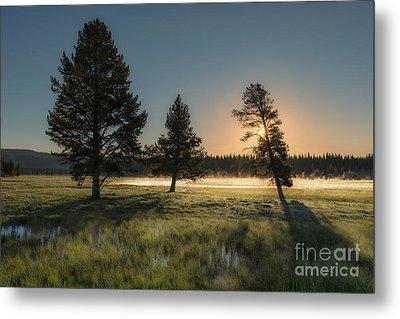 Morning Light In Yellowstone Metal Print by Sandra Bronstein