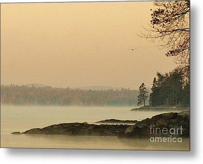 Morning Mist Metal Print by Christopher Mace