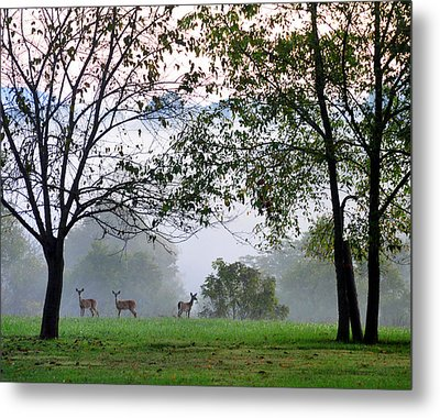 Morning Trio Metal Print by Gail Butler