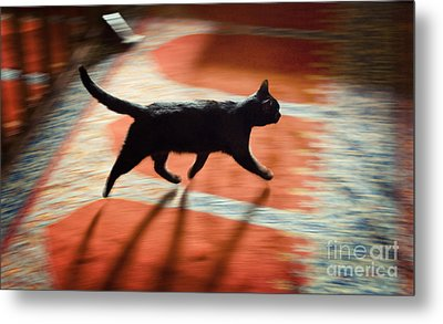 Metal Print featuring the photograph Mosque Cat by Michel Verhoef