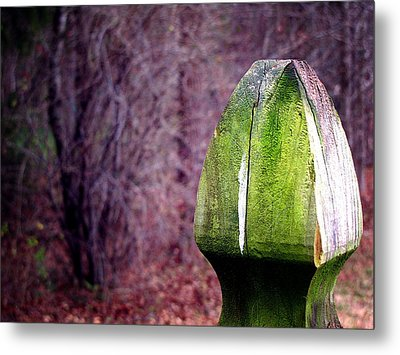 Mossy Post Metal Print