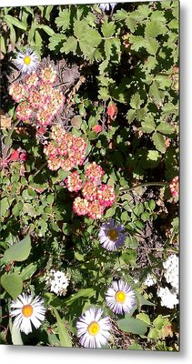 Metal Print featuring the photograph Mountain Wildflowers by Fortunate Findings Shirley Dickerson