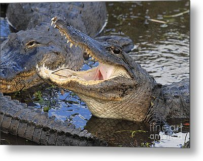 Mouth In The Middle Metal Print by Adam Jewell