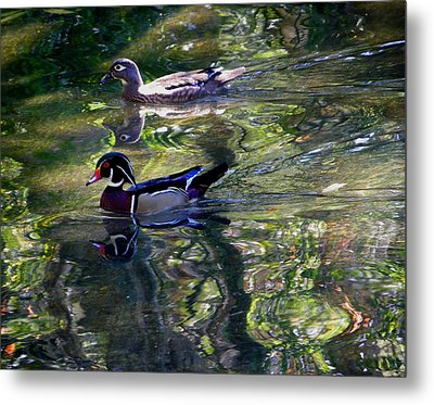 Mr And Mrs P W Duck Metal Print by Judy Wanamaker