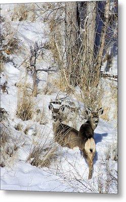 Mule Deer In The Canyon Metal Print