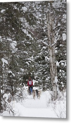 Musher In The Forest Metal Print by Tim Grams