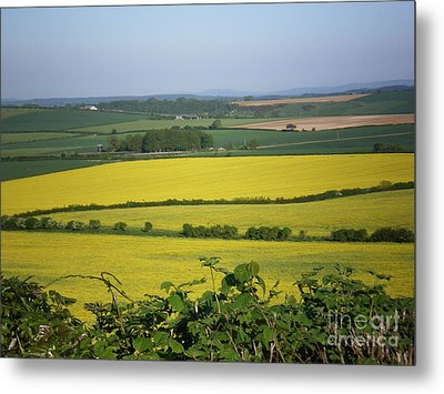 Mustard Colour Fields Metal Print