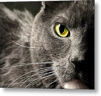 My Eye's On You Metal Print by Diana Angstadt