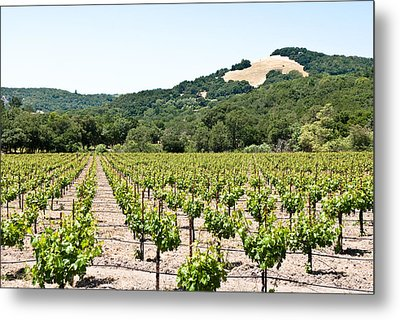Metal Print featuring the photograph Napa Vineyard With Hills by Shane Kelly