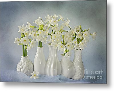 Narcissus 'paperwhites' Metal Print by Jacky Parker