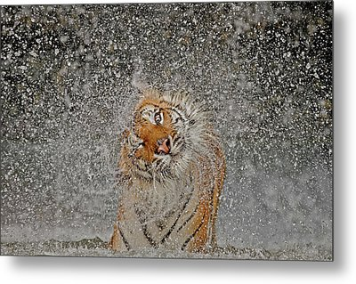 Nat Geo Recognition A?? The Explosion Metal Print