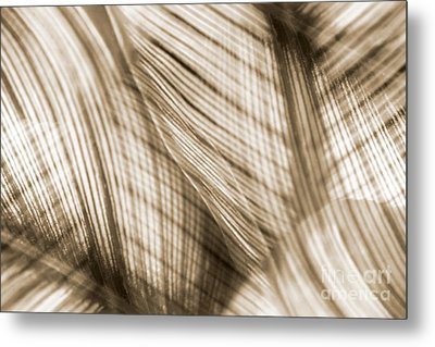Nature Leaves Abstract In Sepia Metal Print by Natalie Kinnear