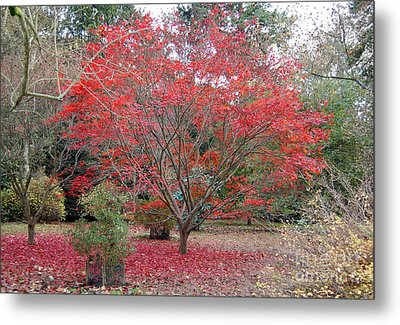 Metal Print featuring the photograph Nature's Red by Linda Prewer
