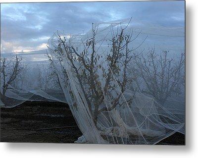 Netted Fruit Trees Metal Print