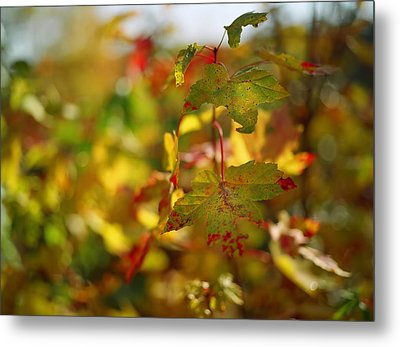 New England Fall On Film Metal Print by Linda Unger