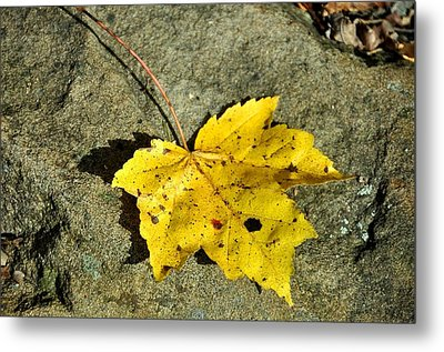 New Moon Metal Print by JAMART Photography