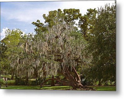 New Orleans Spanish Moss Metal Print by Christine Till