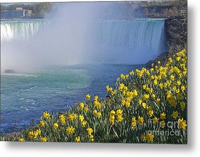 Niagara Falls Daffodils Metal Print by Charline Xia