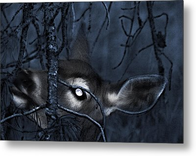 Metal Print featuring the photograph Night Grazing by Janie Johnson