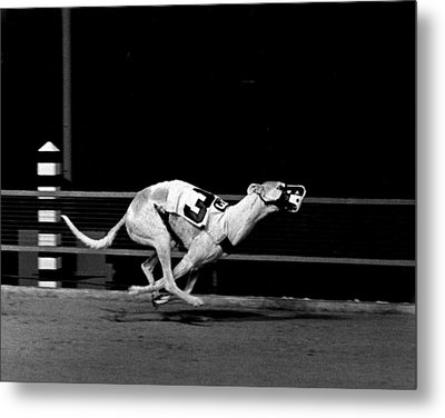 Number 3 Greyhound Running Hard Metal Print by Retro Images Archive