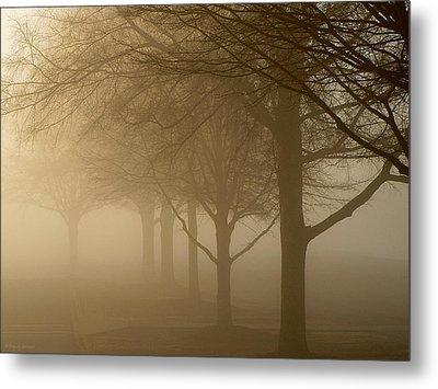 Oaks In The Fog Metal Print