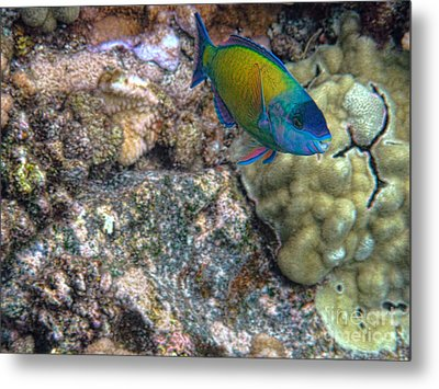Metal Print featuring the photograph Ocean Color by Peggy Hughes